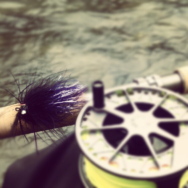 Steelhead fly intruder style marabou and flashabou