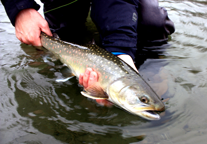 how to catch bull trout fly fishing