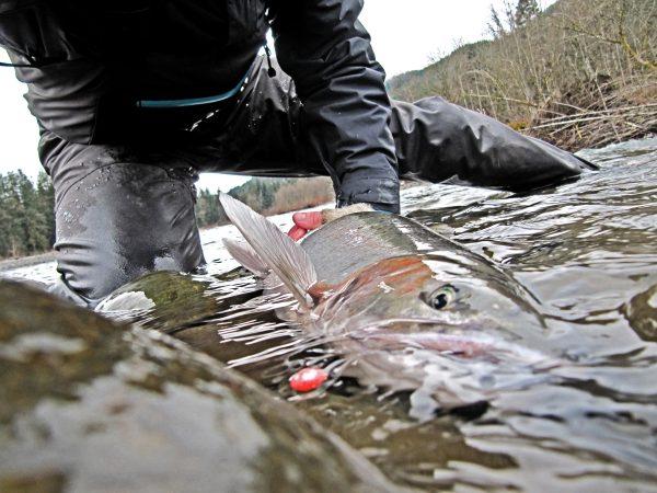 Steelhead fishing in the S13 waders